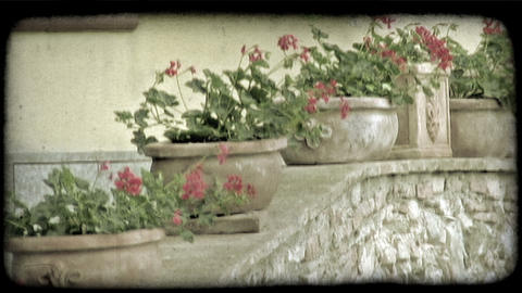 Potted Plants 1. Vintage stylized video clip Footage
