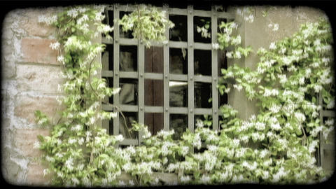 Italian Window. Vintage stylized video clip Live Action