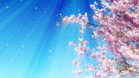 Sakura Tree And Dreamy Sky Animation