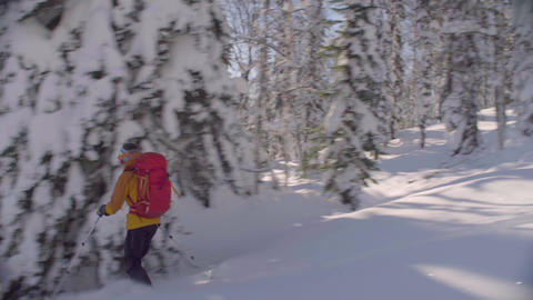 Skitour in Siberia. A freerider riding down the hill in a snowy forest Live Action