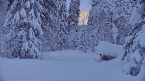 Snowy forest in the Siberian mountains Footage