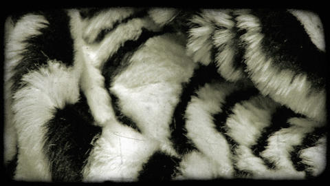 Panning shot of a furry fabric. Vintage stylized video clip Live Action