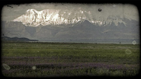 Field of grass and wildflowers. Vintage stylized video clip Footage