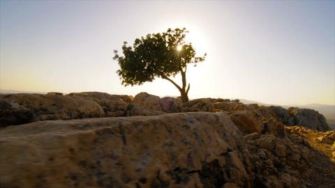 Slow-moving tracking of ruins and tree atop Mt. Arbel Footage