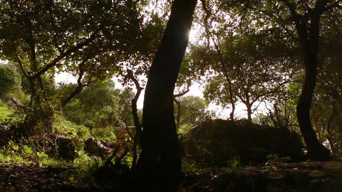 Stock Footage of the sun shining in a silhouetted grove of trees in Israel Footage