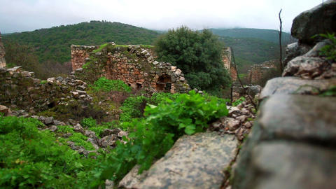 Stock Footage of vegetation growing among the ruins at Bar'am in Israel Footage