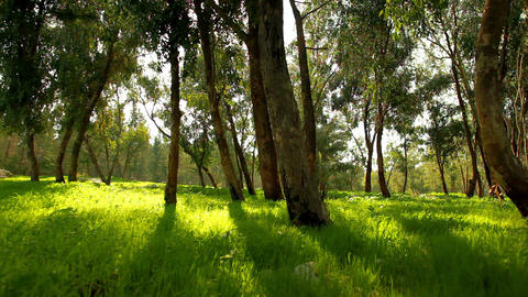 Stock Footage of Mount Tabor forest in Israel Footage
