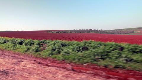 Stock Footage drive-by of a plowed roadside field in Israel Footage