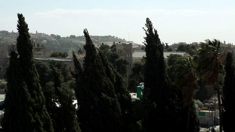 Stock Footage of blowing trees and Jerusalem buildings in Israel Footage