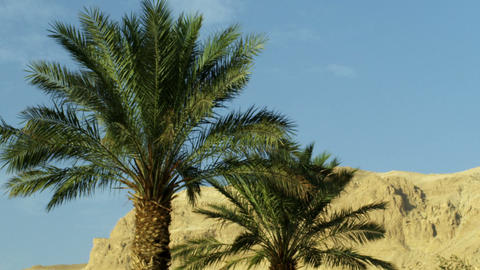 Stock Video Footage of Ein Gedi palm trees and a mountain shot in Israel at 4k w Footage