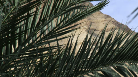 Royalty Free Stock Video Footage of palm fronds in the desert shot in Israel at  Footage