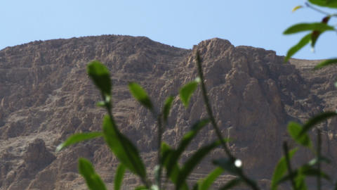Royalty Free Stock Video Footage of desert cliffs and greenery shot in Israel at Footage