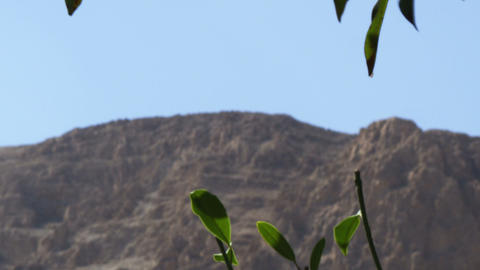 Royalty Free Stock Video Footage of tree branches in the desert shot in Israel a Footage
