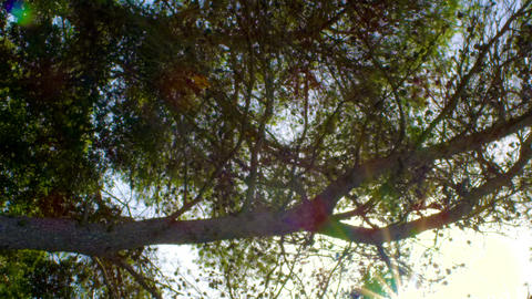 Royalty Free Stock Video Footage of sunshine through branches shot in Israel at  Footage