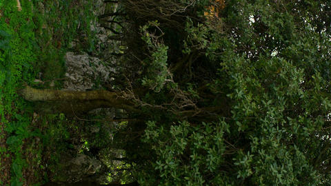 Royalty Free Stock Video Footage panorama of windy Carmel forest shot in Israel  Footage