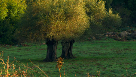 Royalty Free Stock Video Footage of a hillside meadow shot in Israel at 4k with  Footage