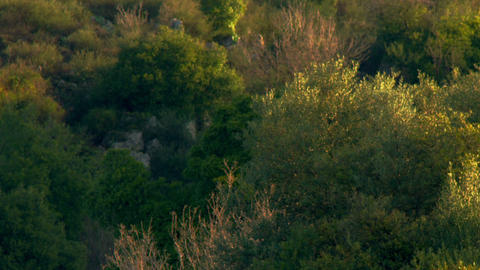 Stock Video Footage of a vegetated hillside in the morning shot in Israel at 4k  Footage