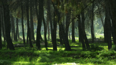 Royalty Free Stock Video Footage of a silhouetted forest shot in Israel at 4k wi Footage