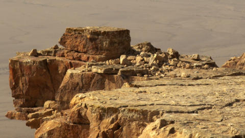 Royalty Free Stock Video Footage of a bird hopping on a cliff edge shot in Israe Live Action