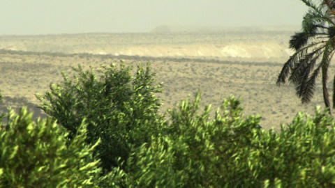 Royalty Free Stock Video Footage of oasis treetops shot in Israel at 4k with Red Live Action