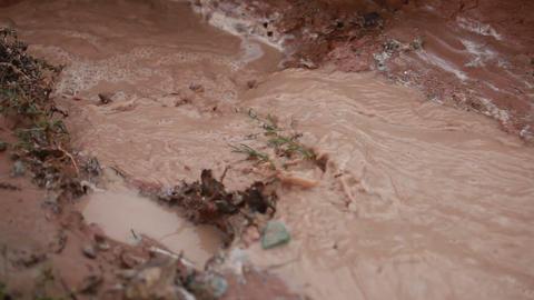 Muddy Stream, Moab Utah Footage