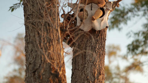 Babydoll in a cattle skull sitting in a tree Footage
