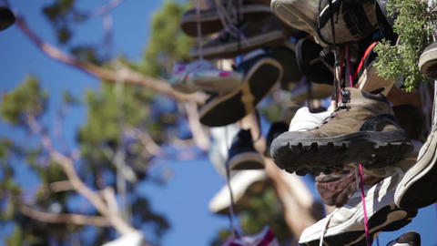 Many pairs of shoes hanging in a tree Footage