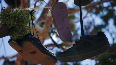 A few pairs of shoes in a tree Footage