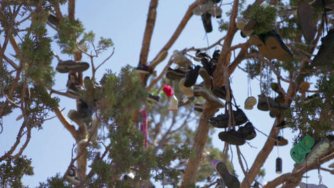 Shoes hanging in tree, red Footage