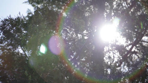 Sun in large pine tree Footage