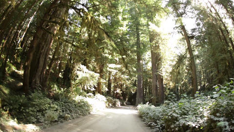 Dirt road through pine tree forest Footage
