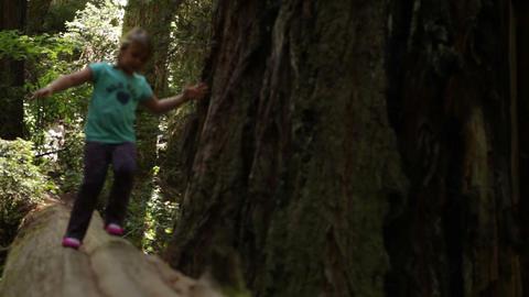 Little girl walks across fallen log Footage