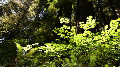 Bright ferns in the sun of a forest Footage