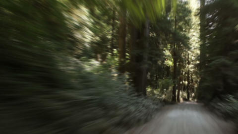 Driving down path in redwood forest Footage