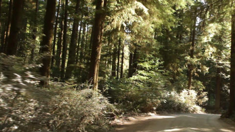 Driving down paved path in redwood forest Footage