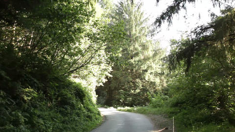 Forest road in shadow and sun Footage