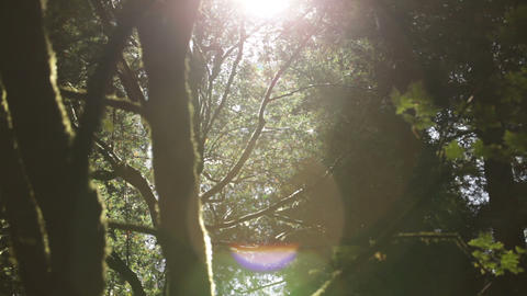 Sun shines through foliage Footage