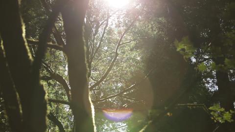 Sun shines through foliage Footage