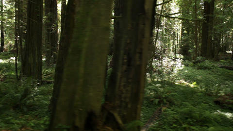 Forest sights of fern and logs Footage