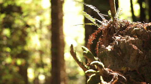 Tree Stump with Ferns Footage