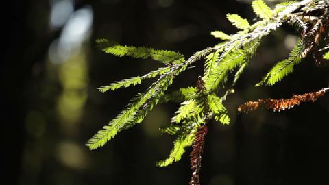 Thin Branch with Cobweb Against Dark Background Footage