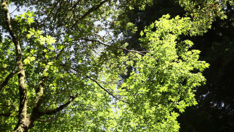 Bright Green Branches and Dark Forest Canopy Footage