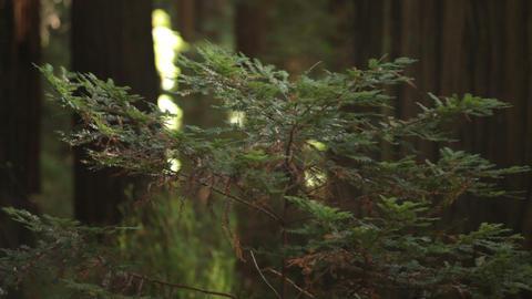 Leafy Sapling in Gentle Breeze Footage