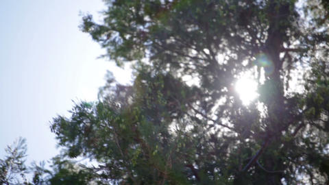 Sun behind large pine tree creating lens flares Footage