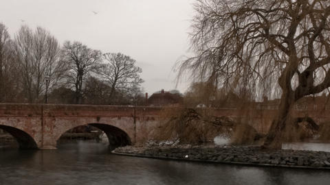 Time-lapse of swans on the river Avon in Stratford-upon-Avon, England. Cropped Footage
