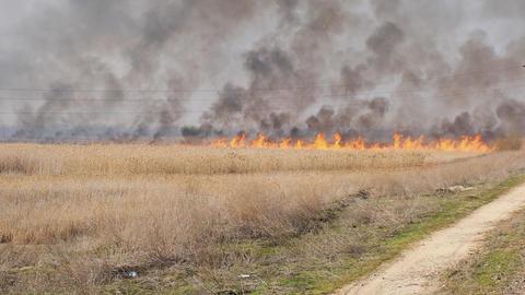 fire in the field blown by a strong wind, Ukraine Archivo