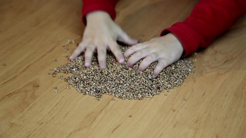 buckwheat Stock Video Footage
