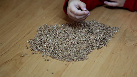 Buckwheat stock footage