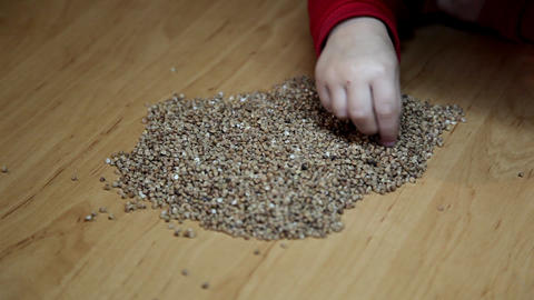 buckwheat Stock Video Footage