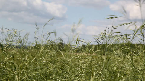 Wind blowing Stock Video Footage